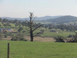 Australia-Melbourne-Warrook%20Cattle%20F